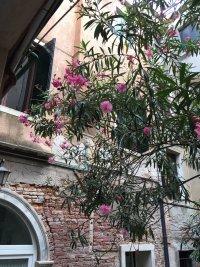 La Galleria Venezia